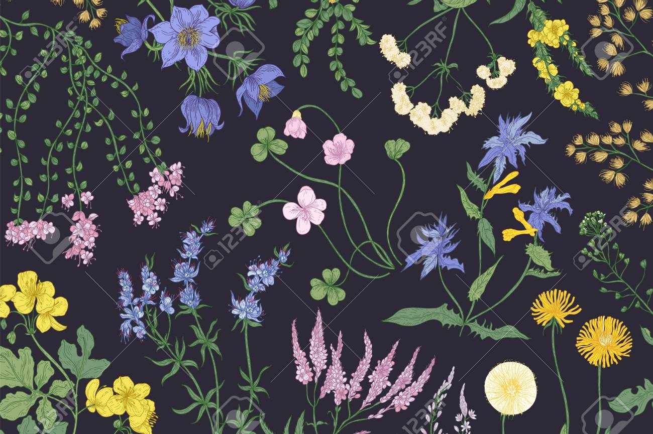 046eb2bd7ce Beautiful horizontal botanical background with romantic blooming wild  flowers