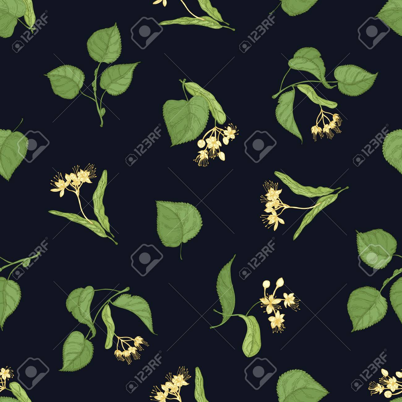 Floral seamless pattern with linden leaves and inflorescences on black background. Backdrop with medicinal plant. Colored hand drawn vector illustration in vintage style for textile print, wallpaper - 117295998