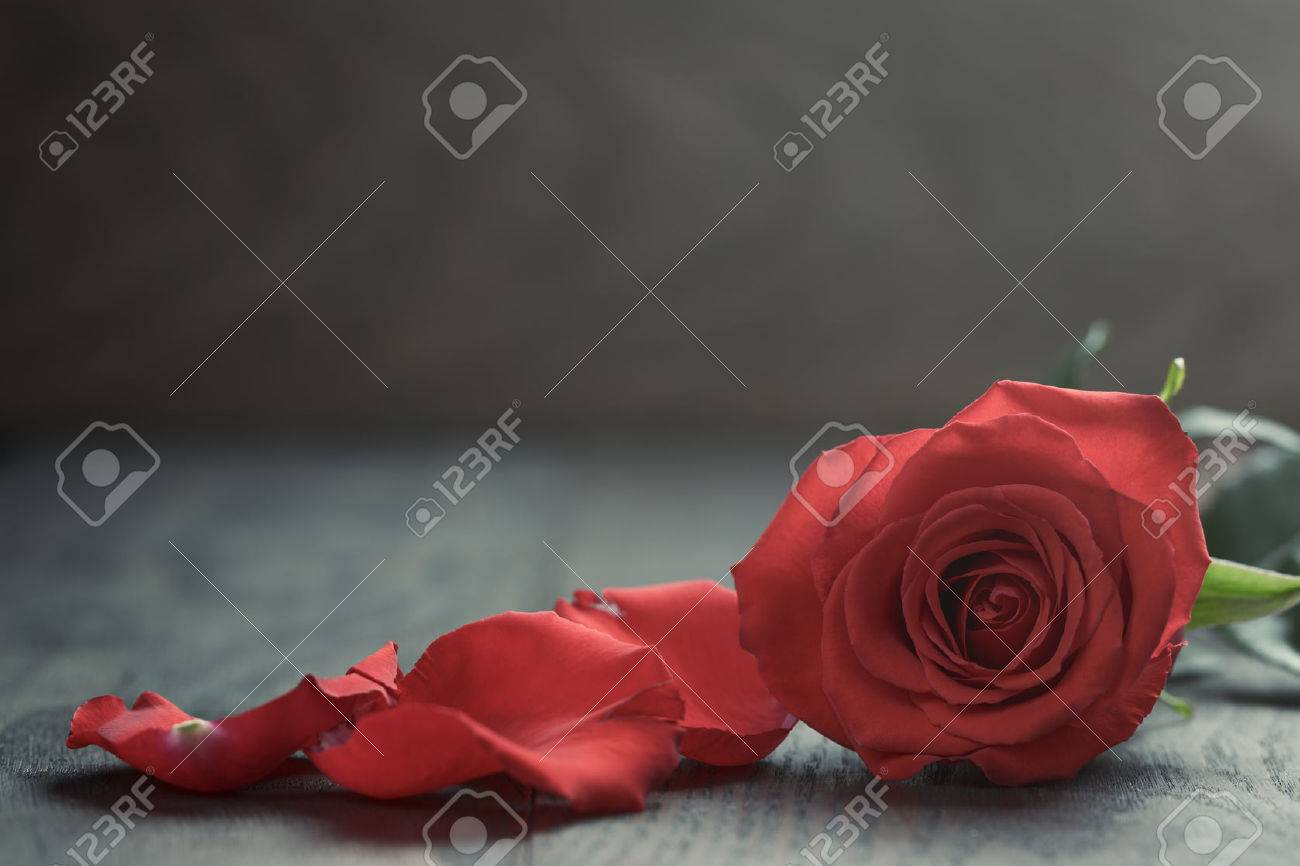 Red rose with petals on wood table - 36343955