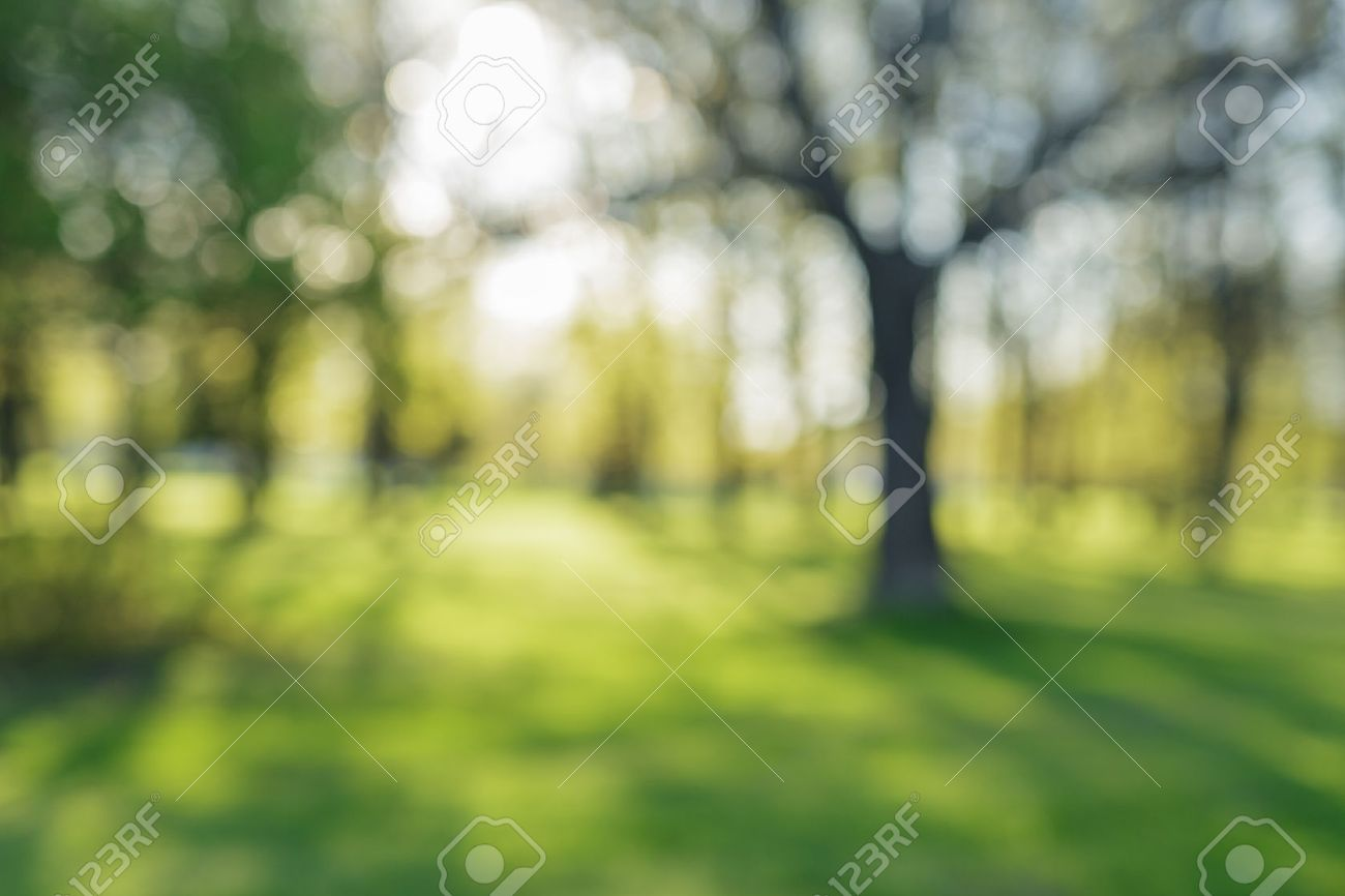 defocused bokeh background of apple garden with blossoming trees in sunny day, backdrop - 41080104