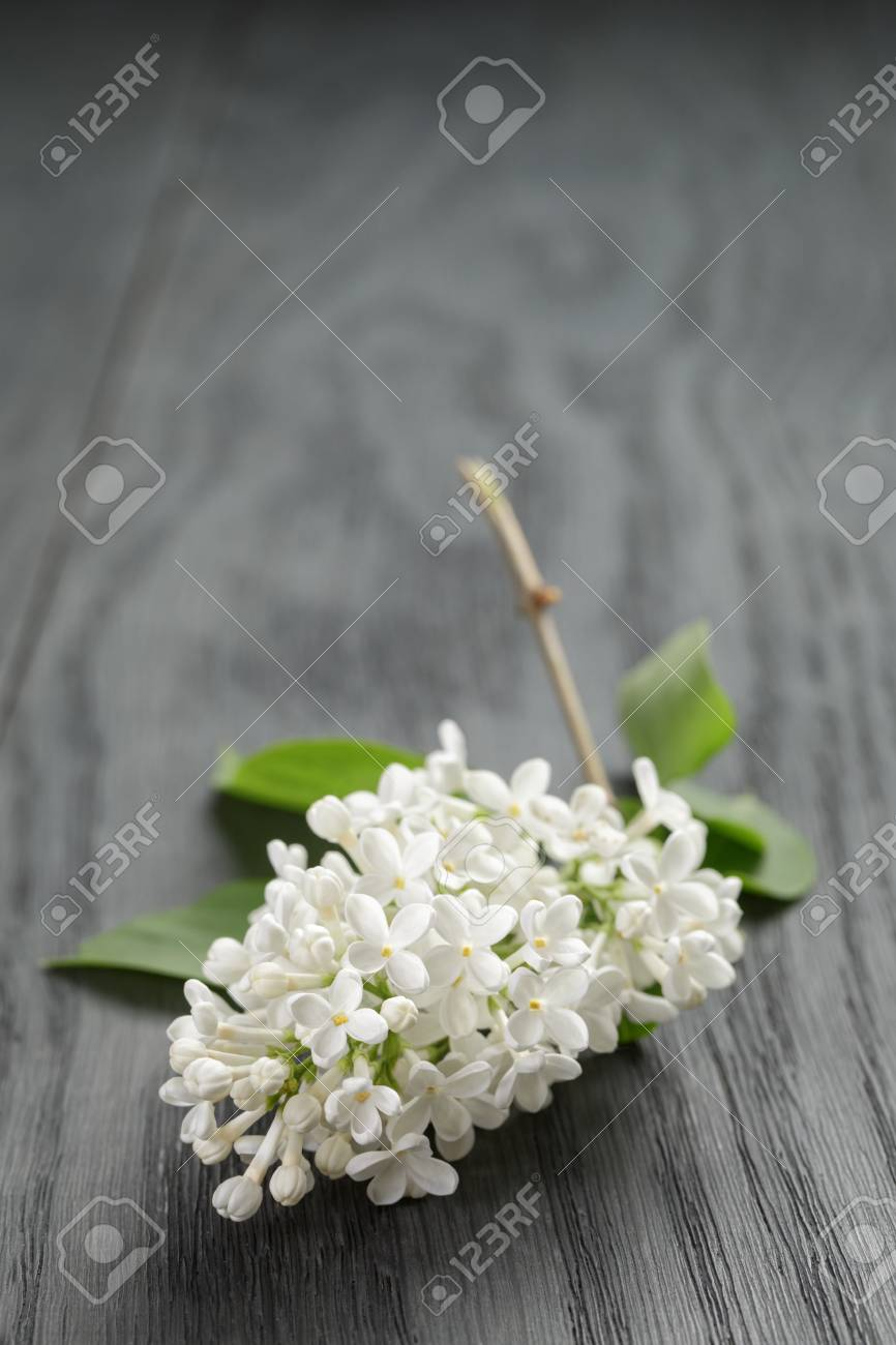 white lilac flower on old oak table summer rustic flowers stock