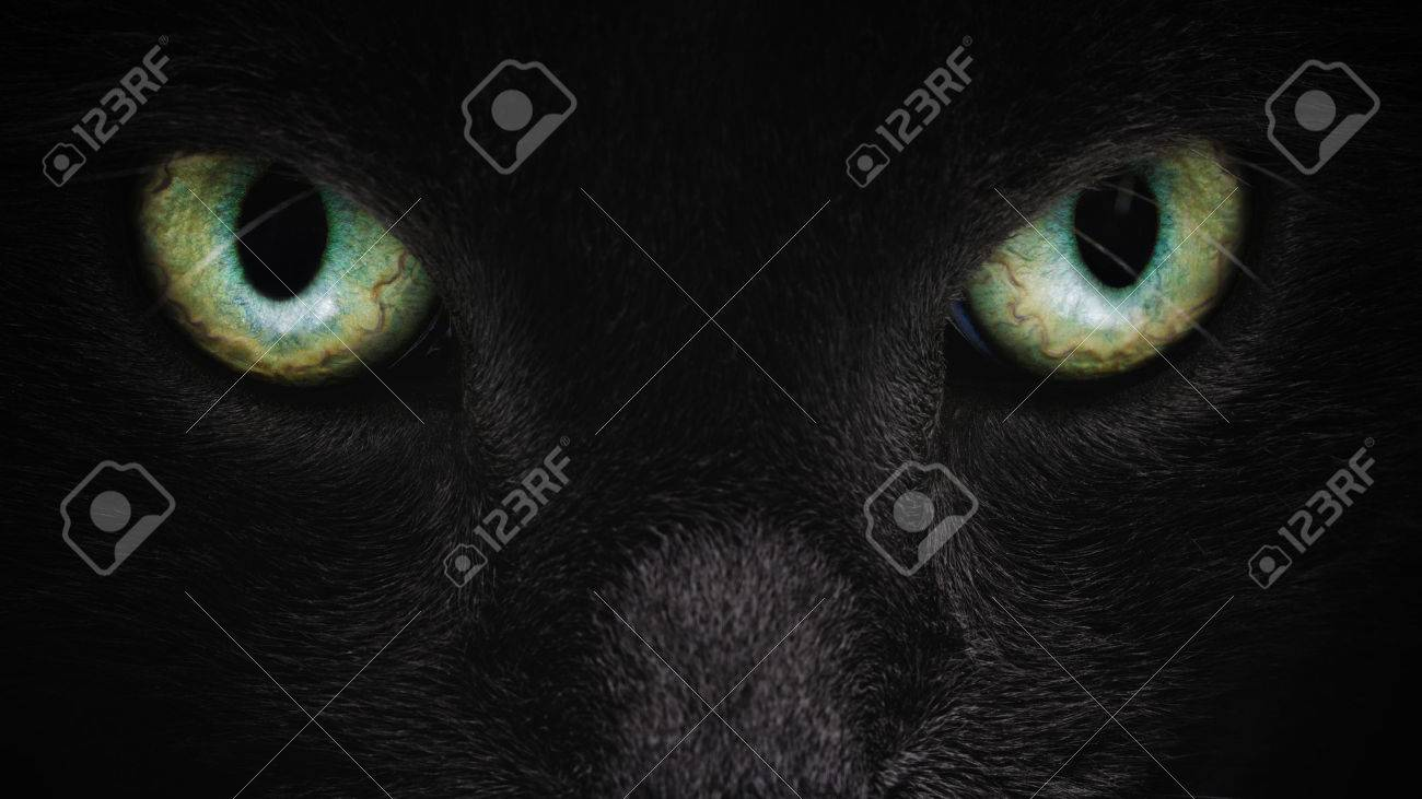 grey cat face closeup with green eyes, british cat - 52907474