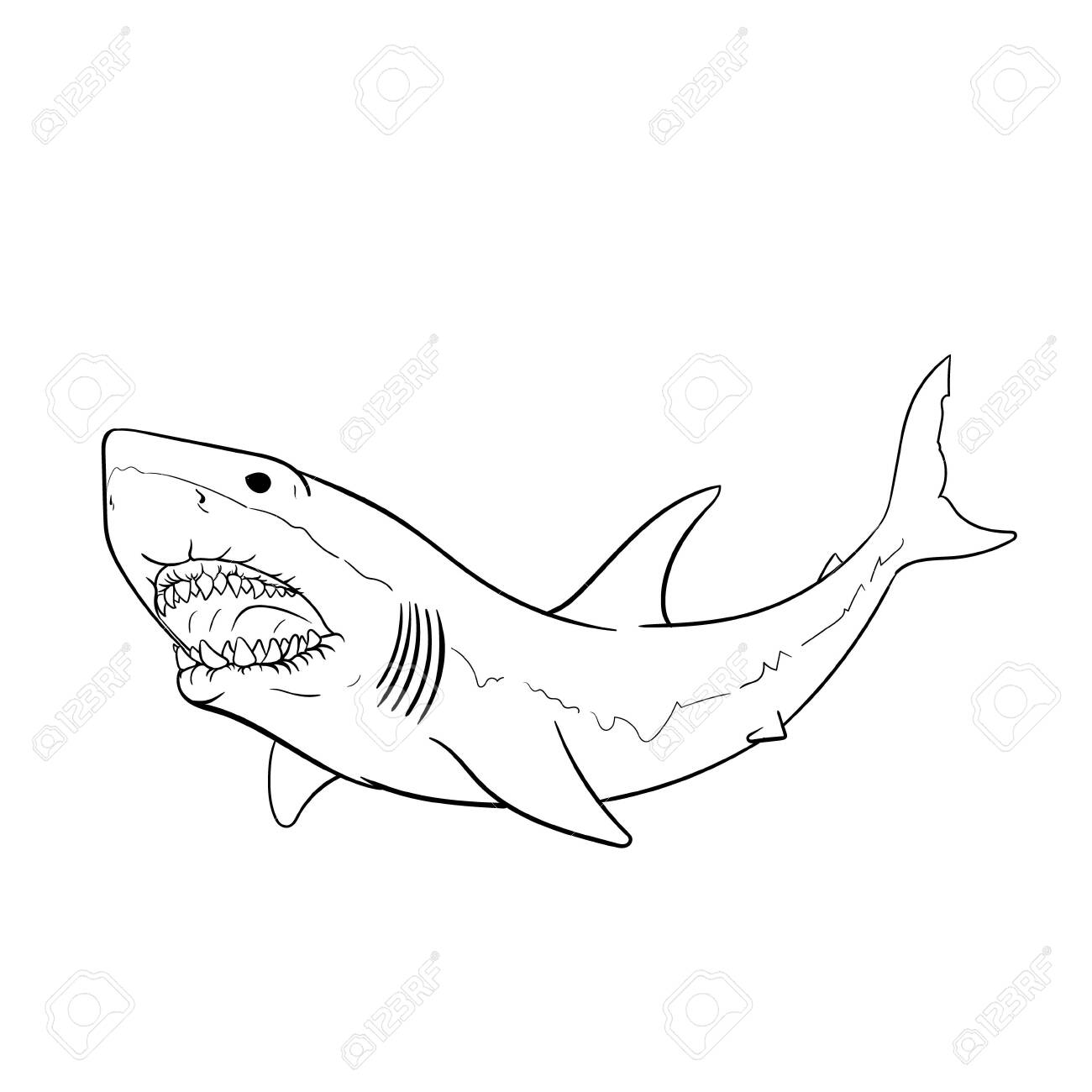 Great White Shark Hand Drawing Vintage Engraving Illustration Royalty Free Cliparts Vectors And Stock Illustration Image 126140445