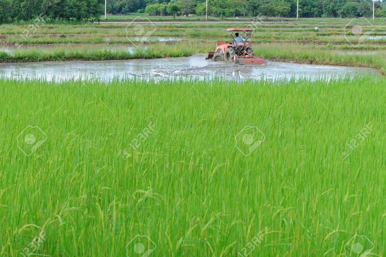 Farm worker preparing the ground for the growth of rice with tractor, Thailand Stock Photo - 14005609