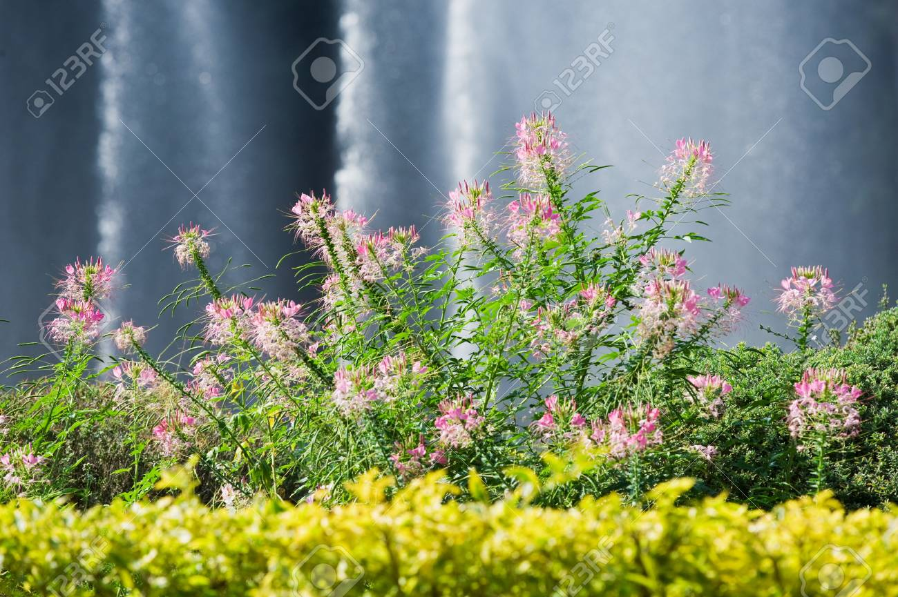 Flower garden with fountain in background Stock Photo - 18047303