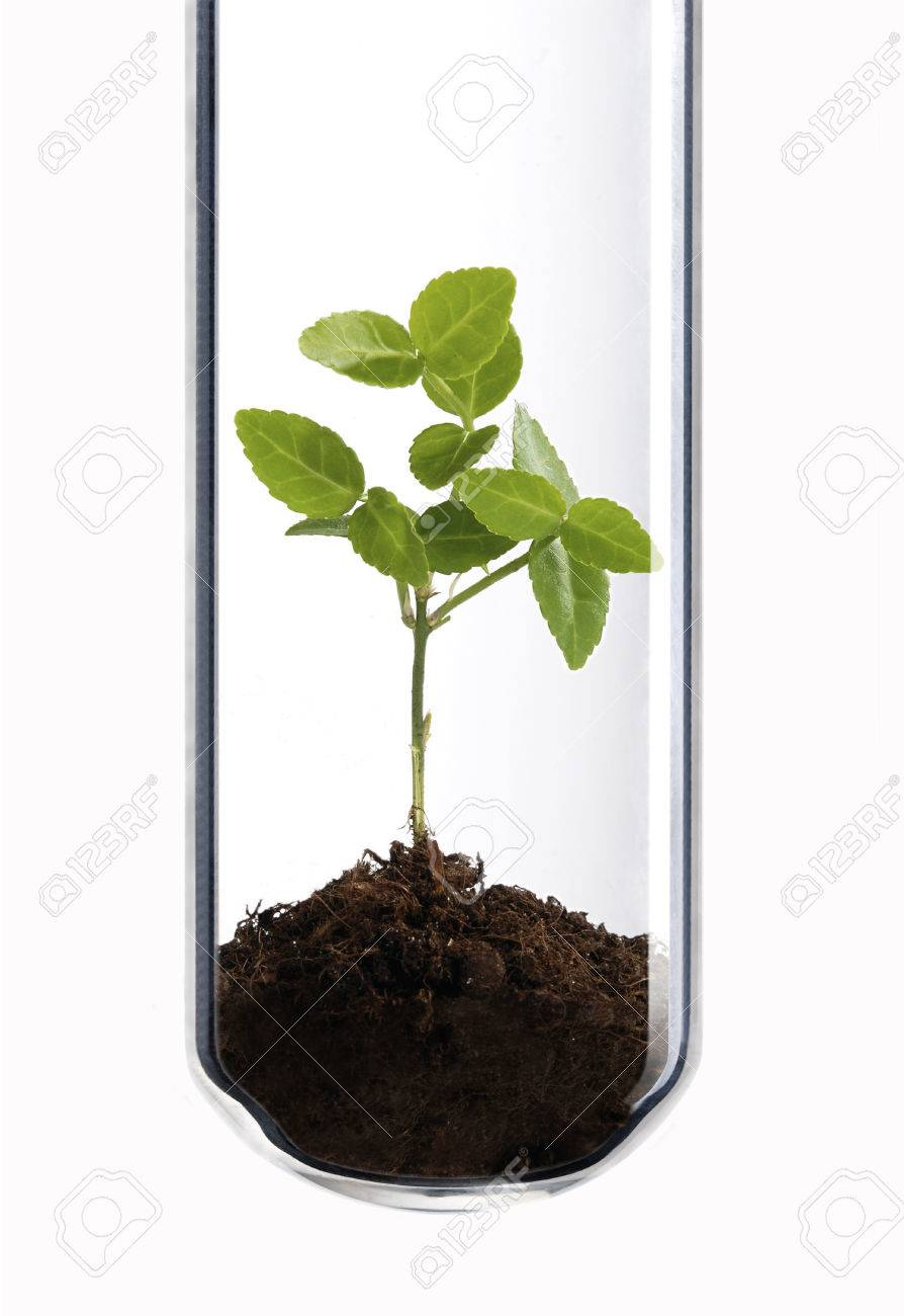 Small Green Plant In A Test Tube As A Symbol Of Green Biotechnology