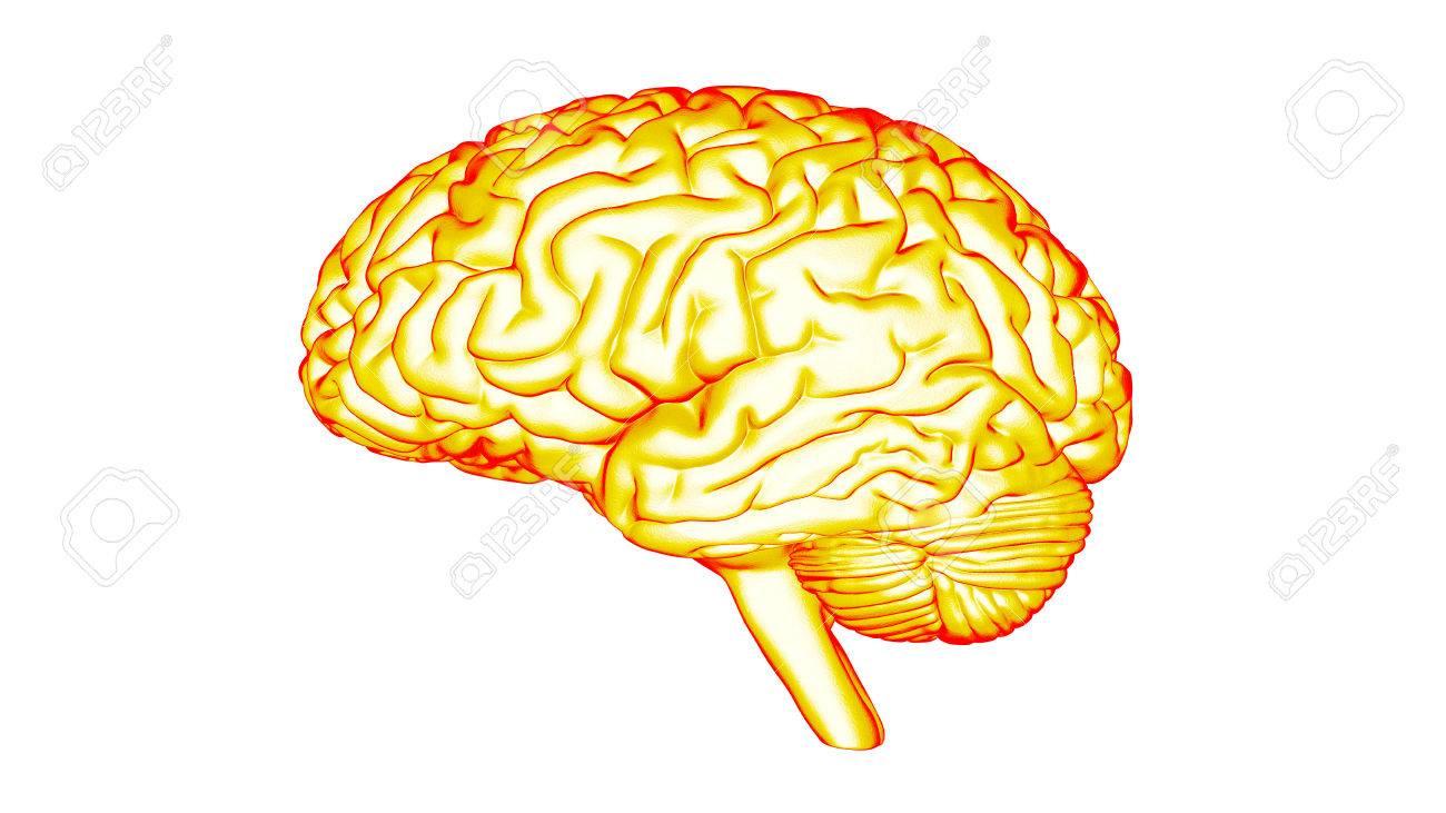 Human brain 3D render Stock Photo - 72442761
