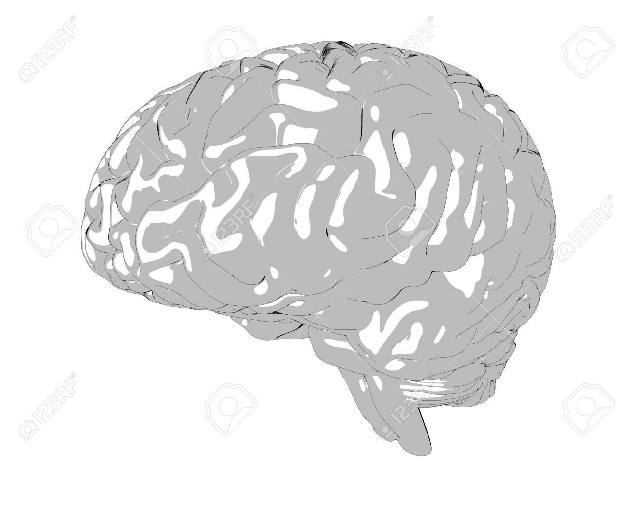 Human brain 3D render Stock Photo - 75860174