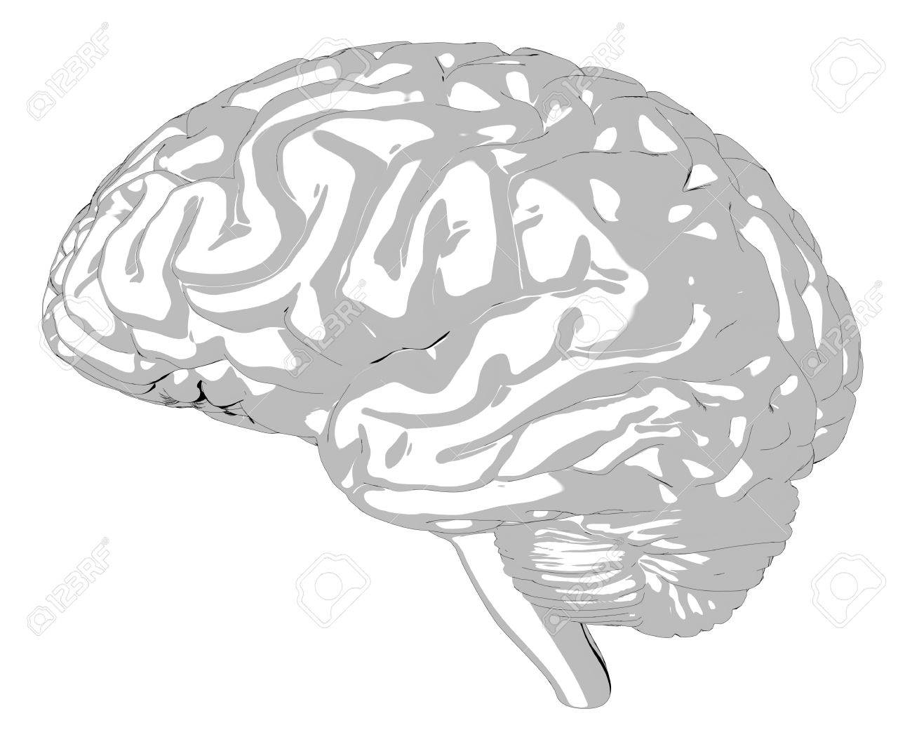 Human brain 3D render Stock Photo - 75810844