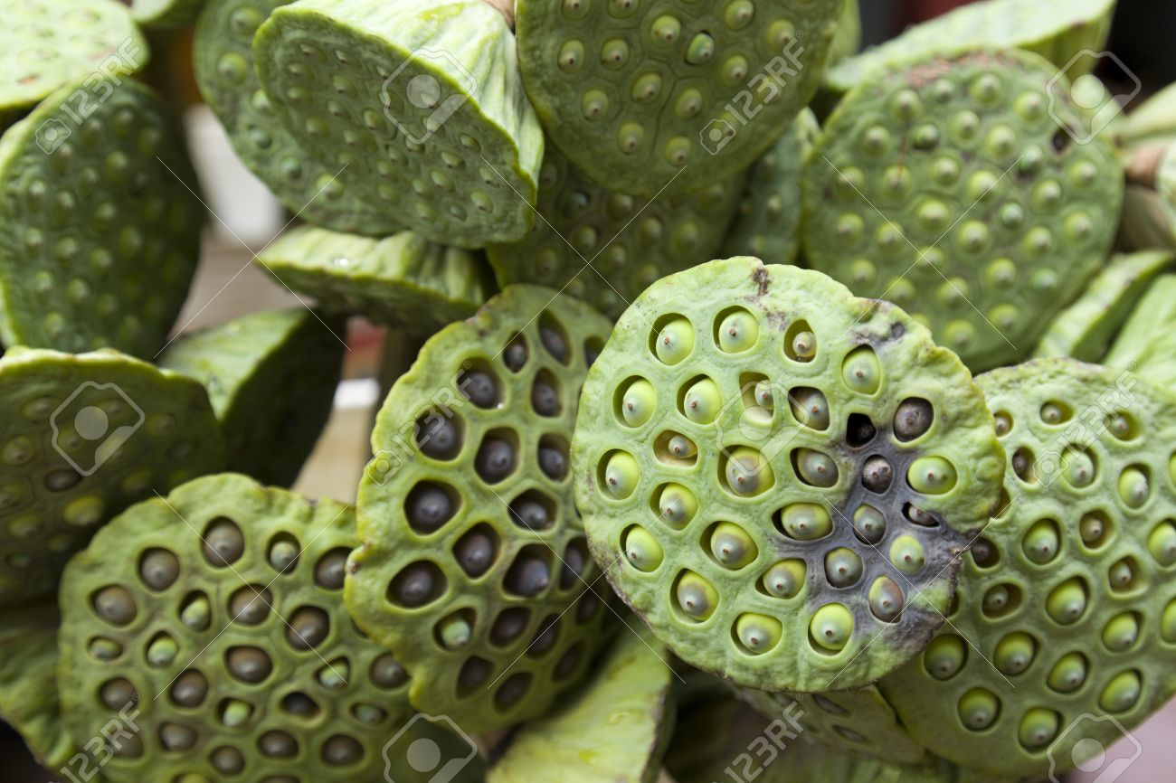 Lotus Flower Seed Pods Bizarre And Ornamental Stock Photo Picture