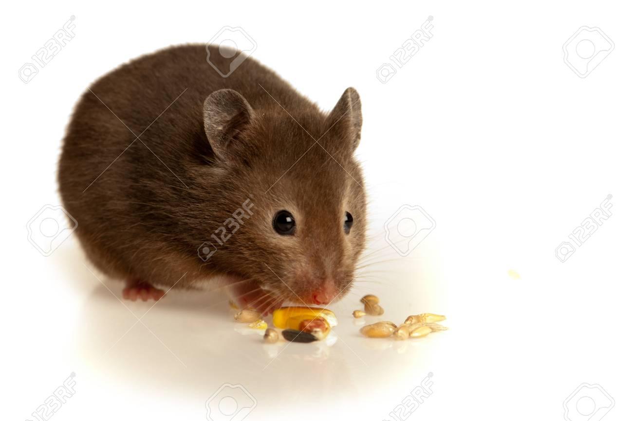 Studio mouse Get Move