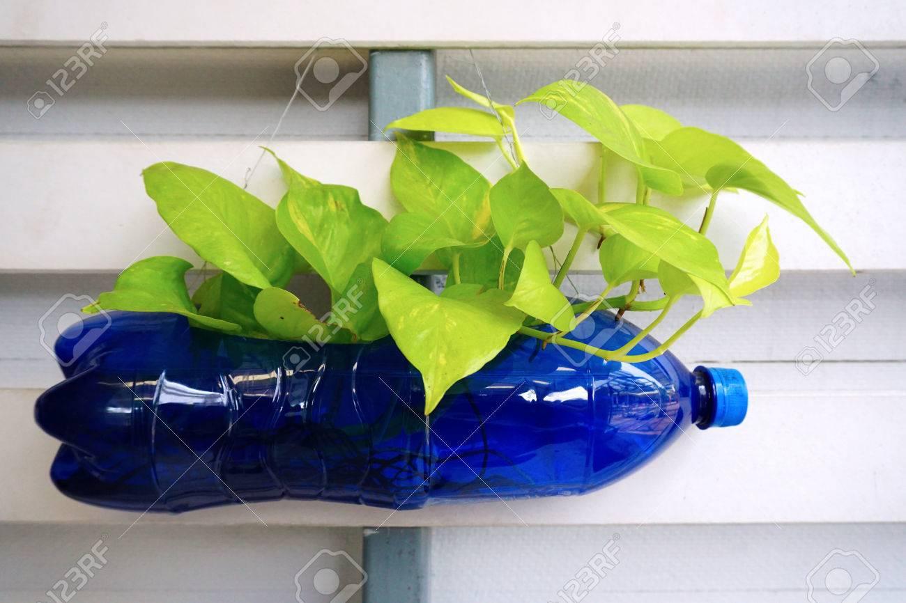 Bottle Tree Stock Photos. Royalty Free Bottle Tree Images