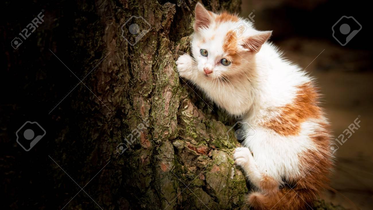 climbing on tree, this cat photo was taken during travel wando