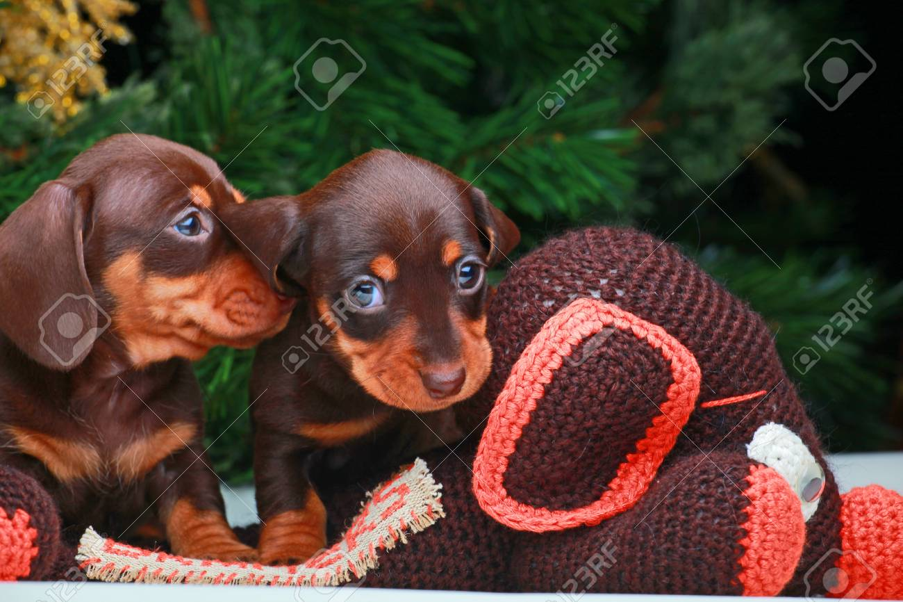 New years Dogs Wallpapers Stock Photo - 92189055