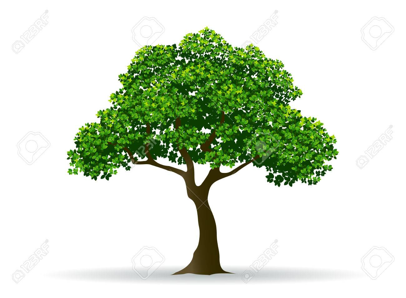tree and leaf tree branch realistic tree tree vector royalty free rh 123rf com tree vector silhouette three vectors corp