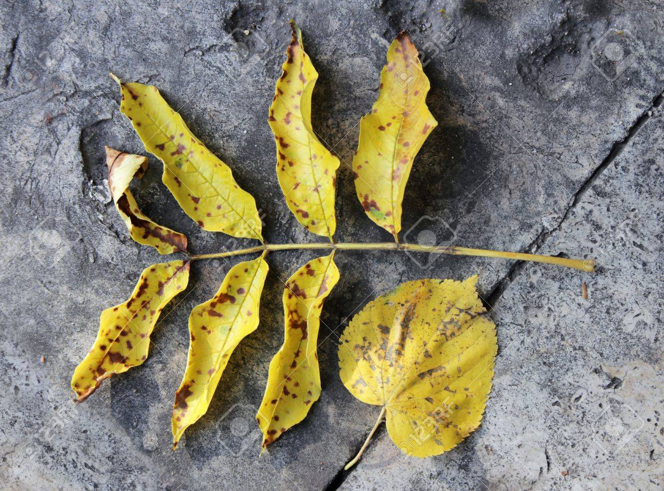 Yellow faded autumn leaves against old flagging stones. Stock Photo - 15682025