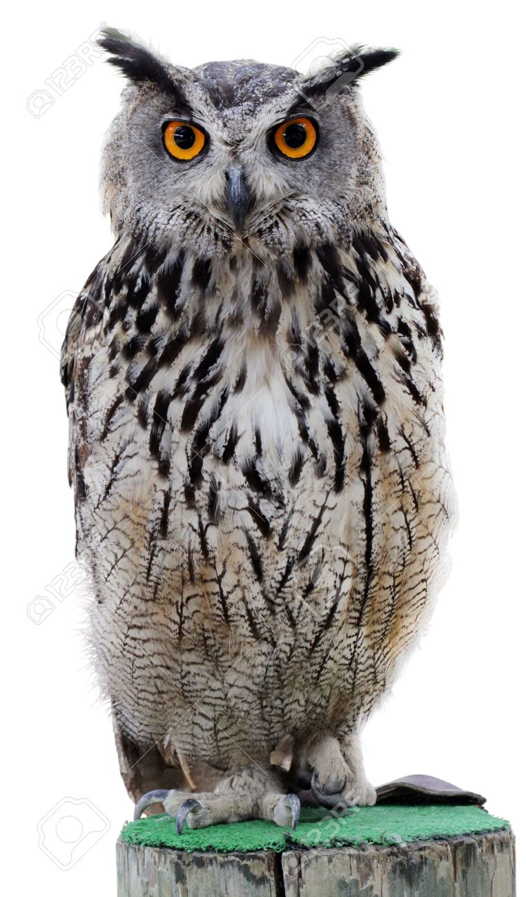 The Indian Eagle-owl, Also Called The Rock Eagle-owl Or Bengal ...