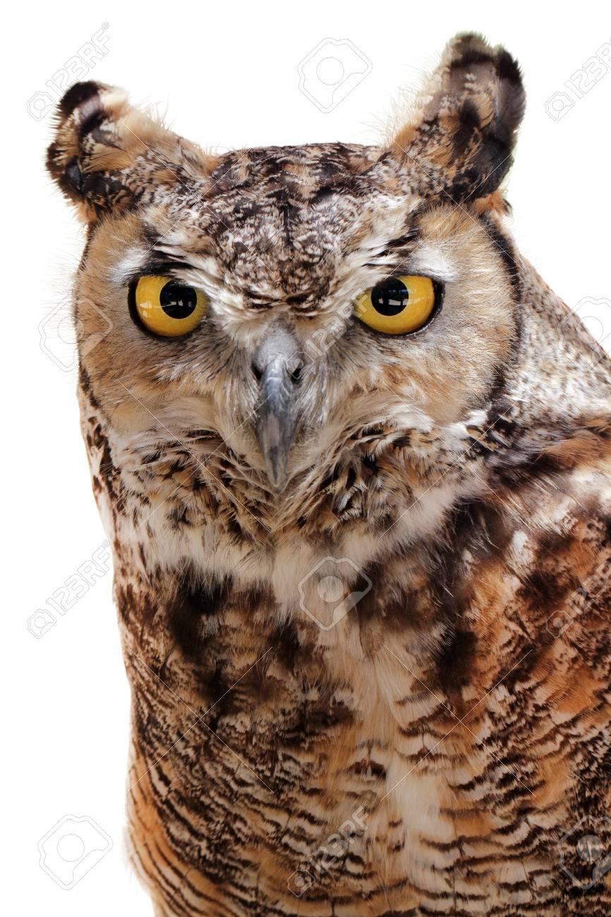 El Indio Eagle-búho, También Llamado El Búho De águila De Bengala O ...