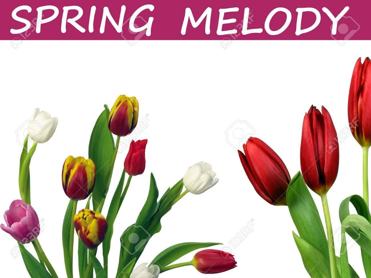 Скачать весенняя мелодия тюльпанов