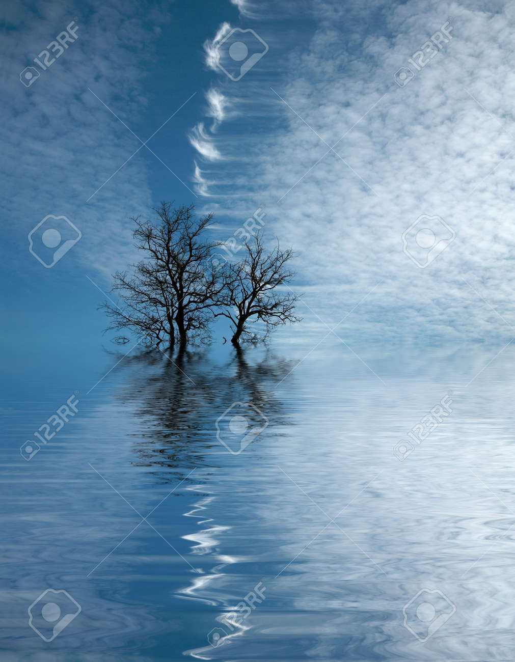 Dry tree flooded with water Stock Photo - 6944628