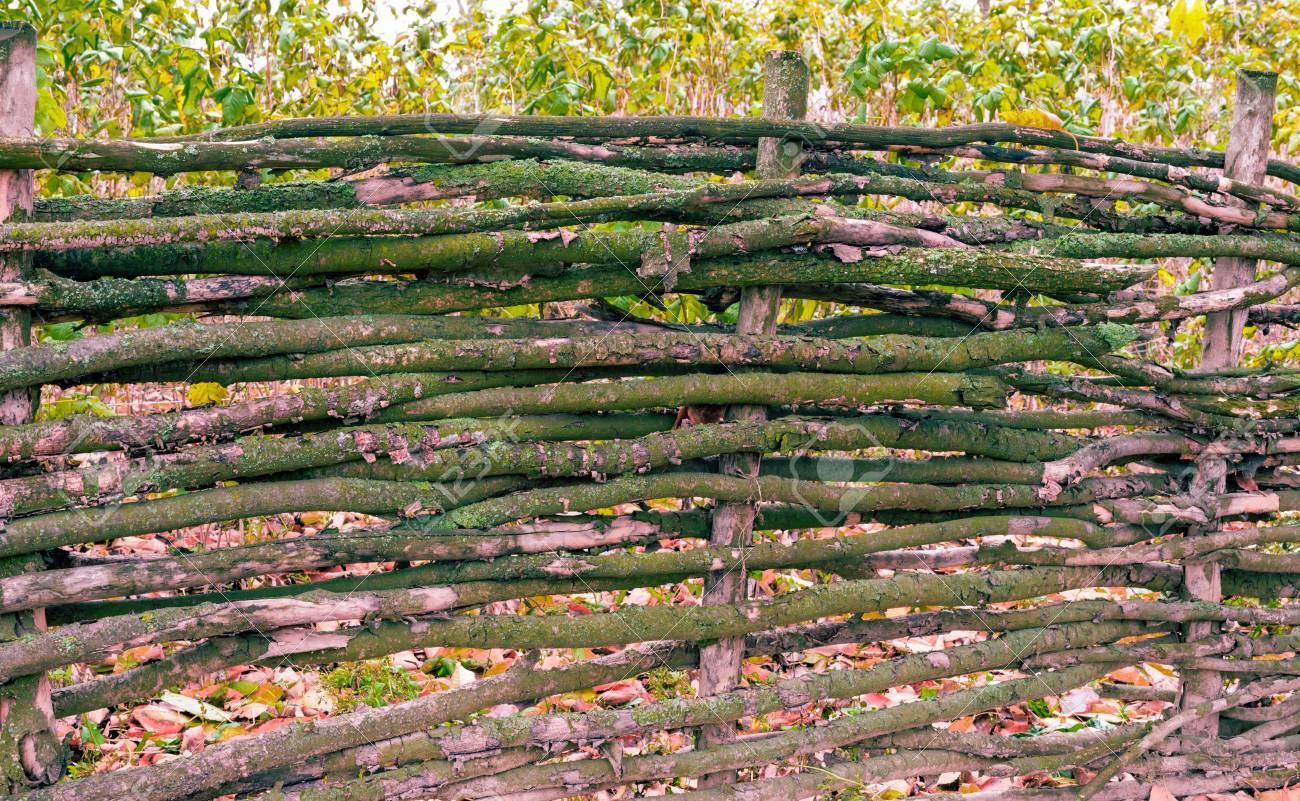 la texture est une clôture en bois avec des branches de charme