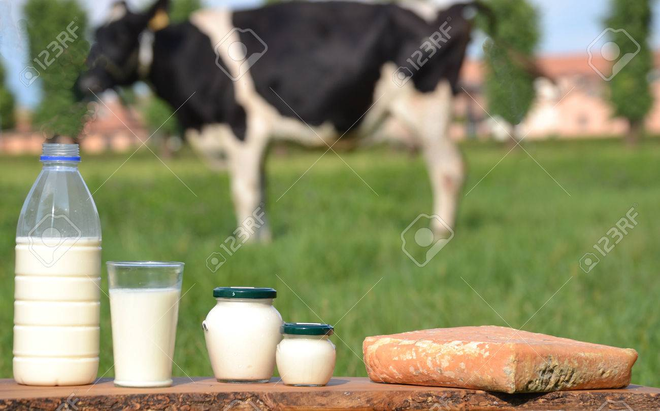 Milk Bottle And Glass On Cow Farm Background Stock Photo