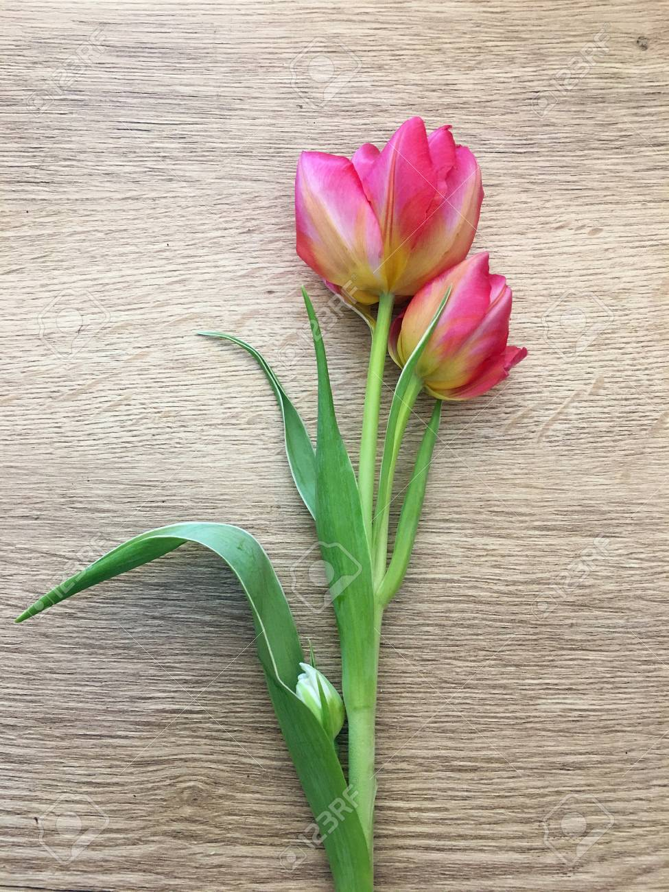 Tulips on a wooden background. Flora, gardening and plant concept - close up of tulip flowers on wooden table. - 121294381