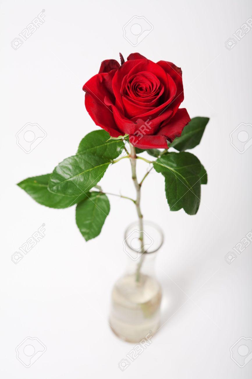 Single red rose in vase over white Stock Photo - 5984525