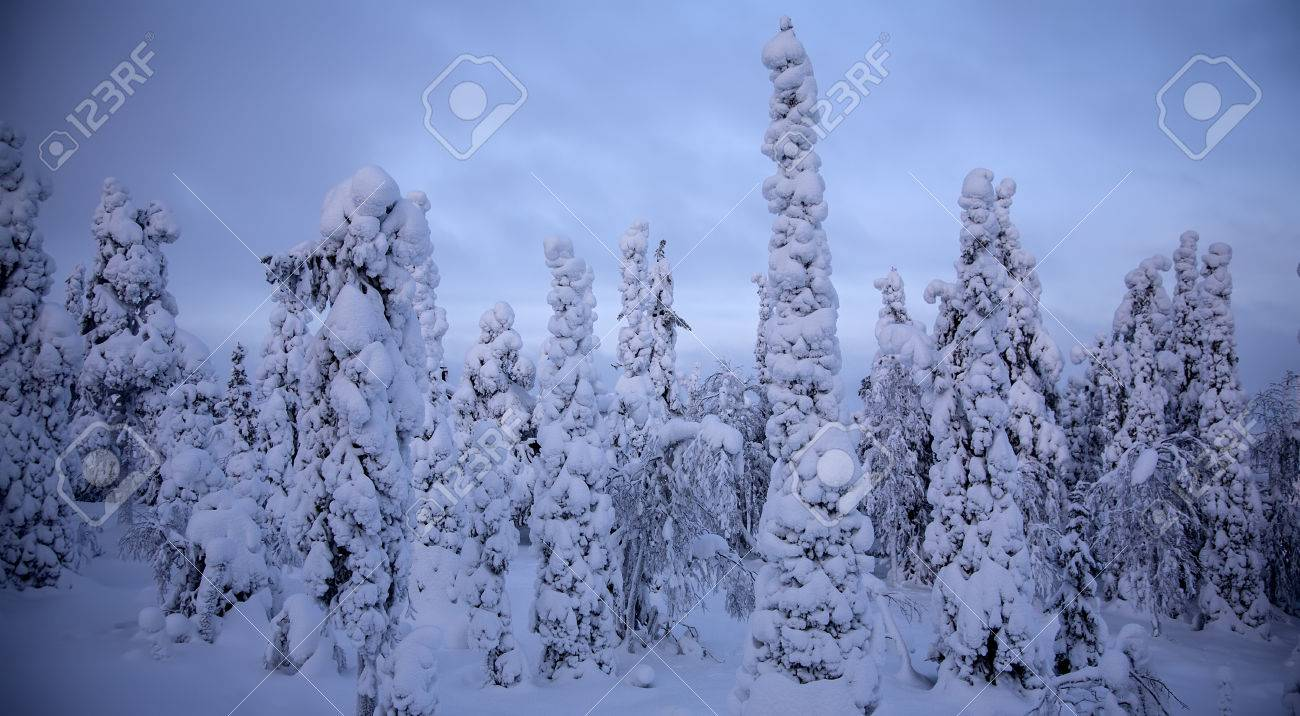 Night forest under snow in winter at Finland after snowfall Stock Photo - 27733757