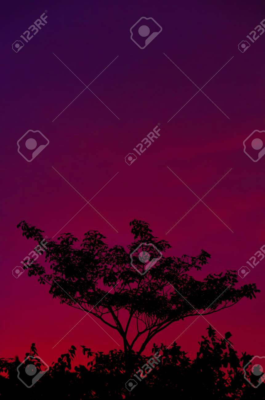 Colorful Evenning Sky (violet) Stock Photo - 14920389