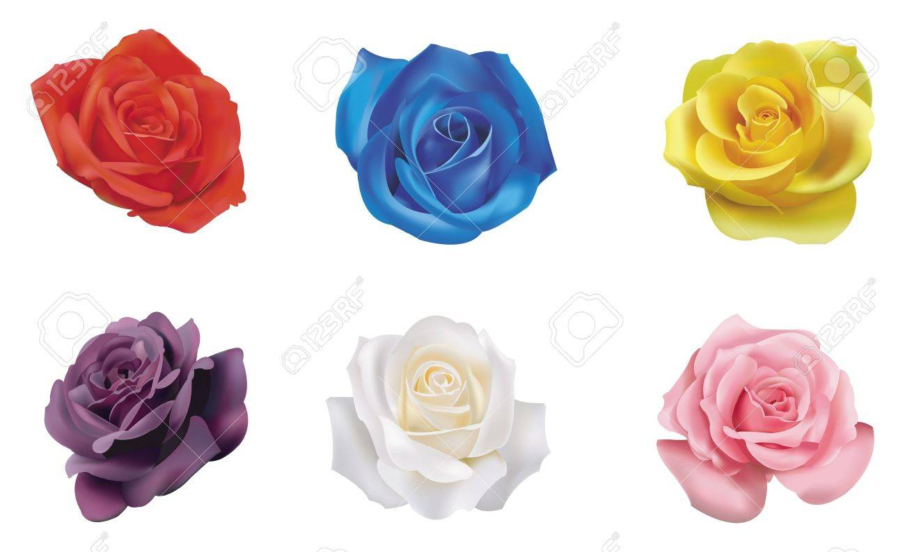 6 color roses collection Stock Vector - 16706325