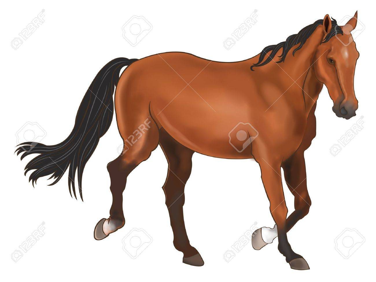 A beautiful horse isolated in white background Stock Vector - 18495939