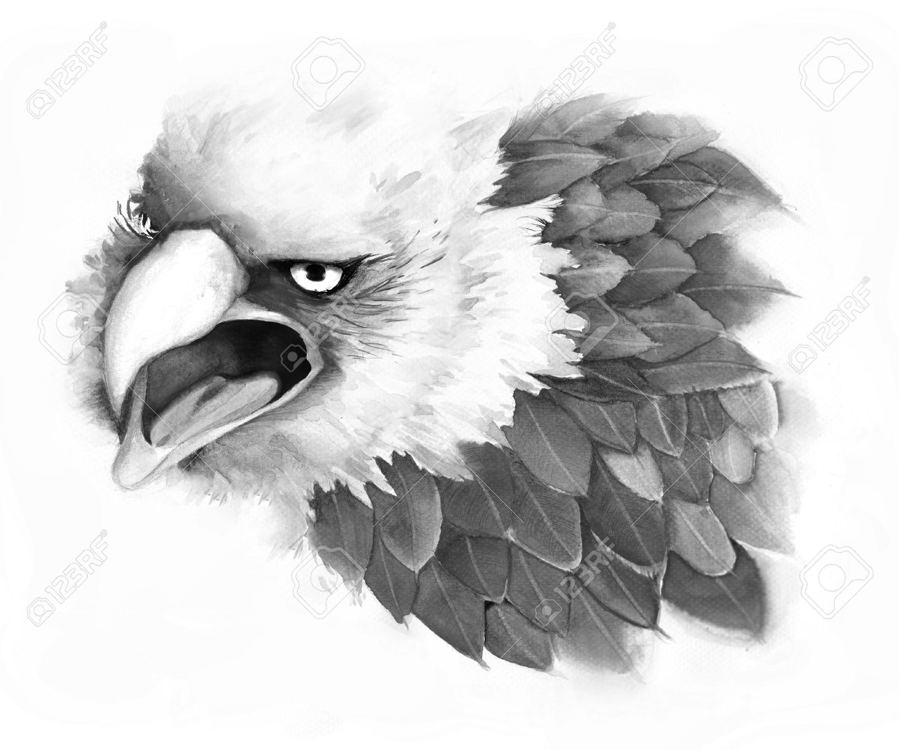 An illustration of fantasy eagle done by pencil sketch stock illustration 28771901
