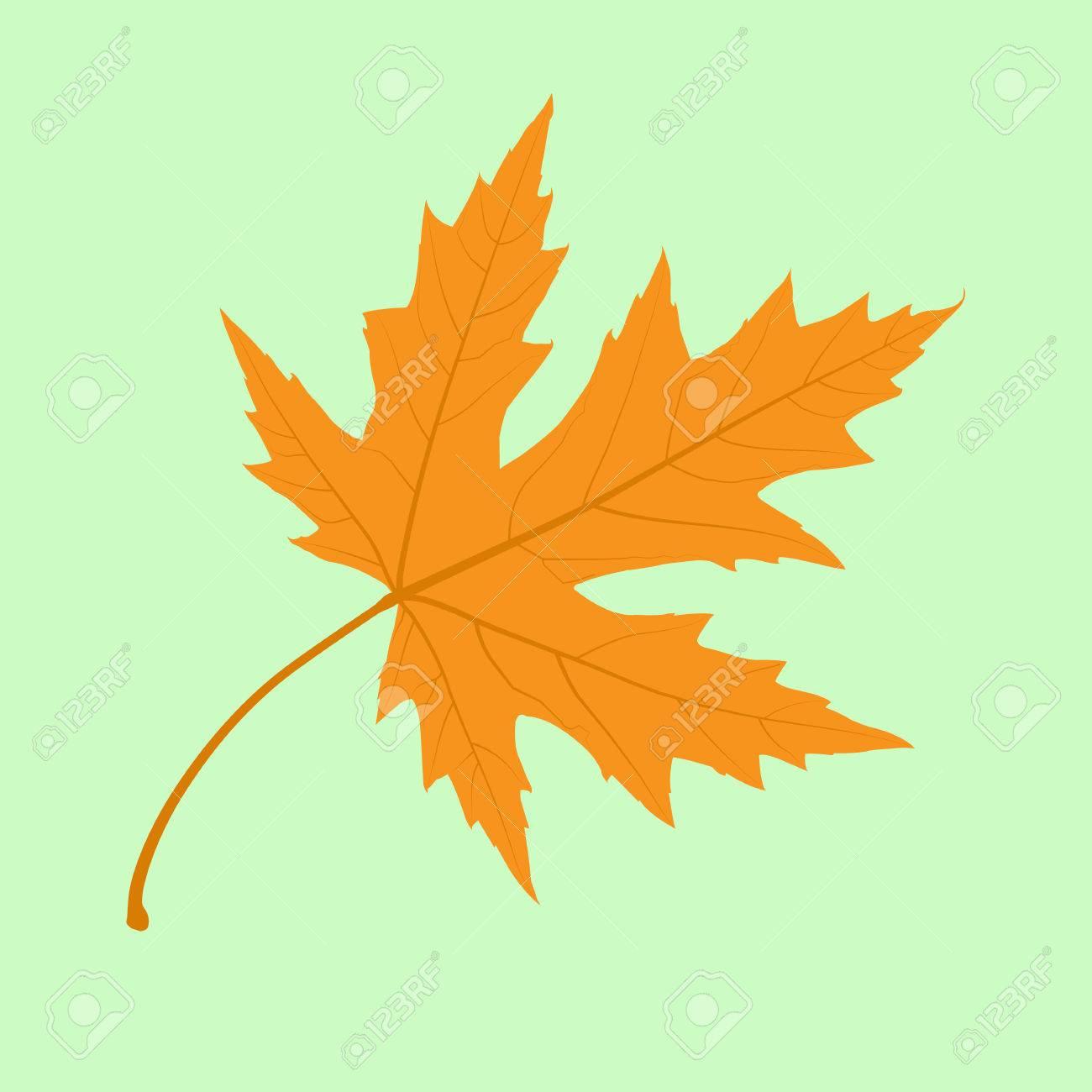 Maple Leaf. Illustration. - 54638853