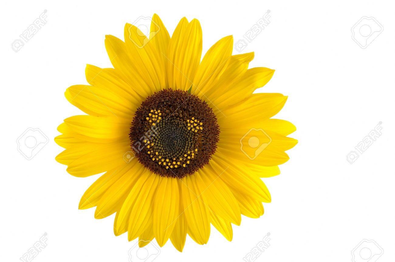 Smiling Sunflower Images Smiling Sunflower Smiley