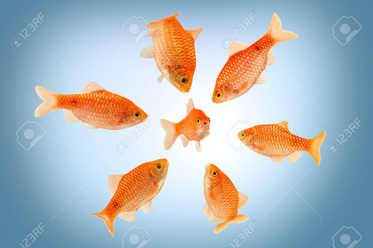 a groupe of big fish surrounding a small fish Stock Photo - 19321840