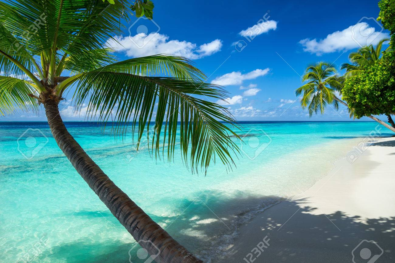coco palms on paradise beach - 42736628