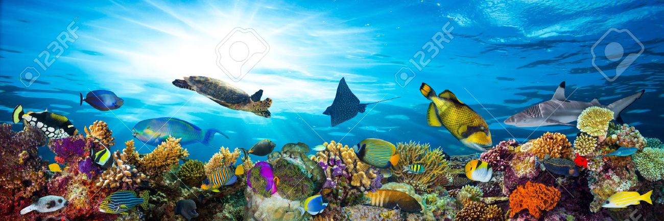colorful coral reef with many fishes and sea turtle - 44150622