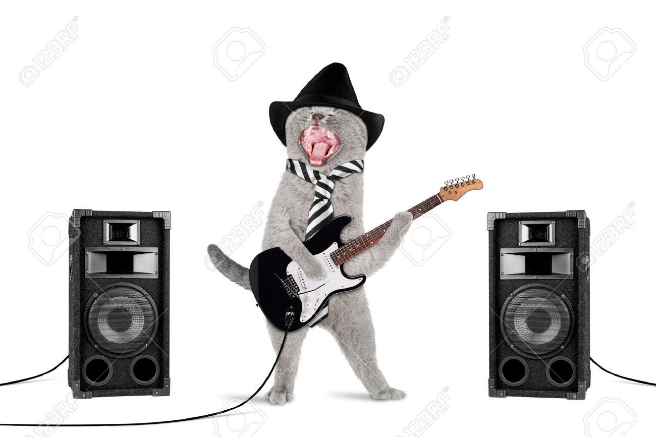 funny rock star cat with guitar and speakers on white background - 44151146