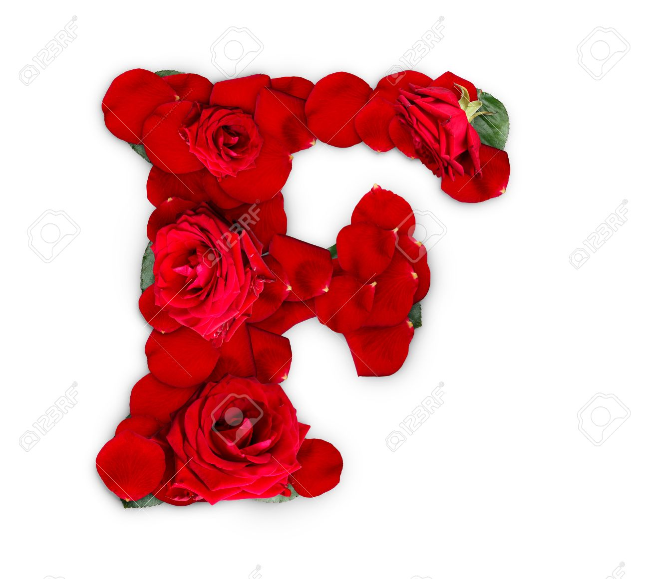 Letter F Made From Red Roses And Petals Isolated On A White