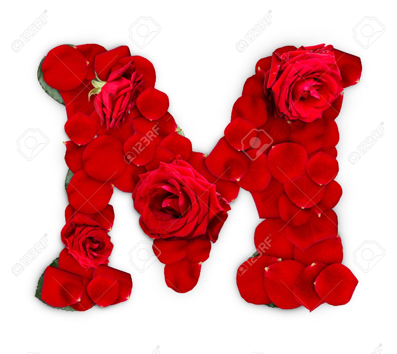 Letter M Made From Red Roses And Petals Isolated On A White Background  Stock Photo