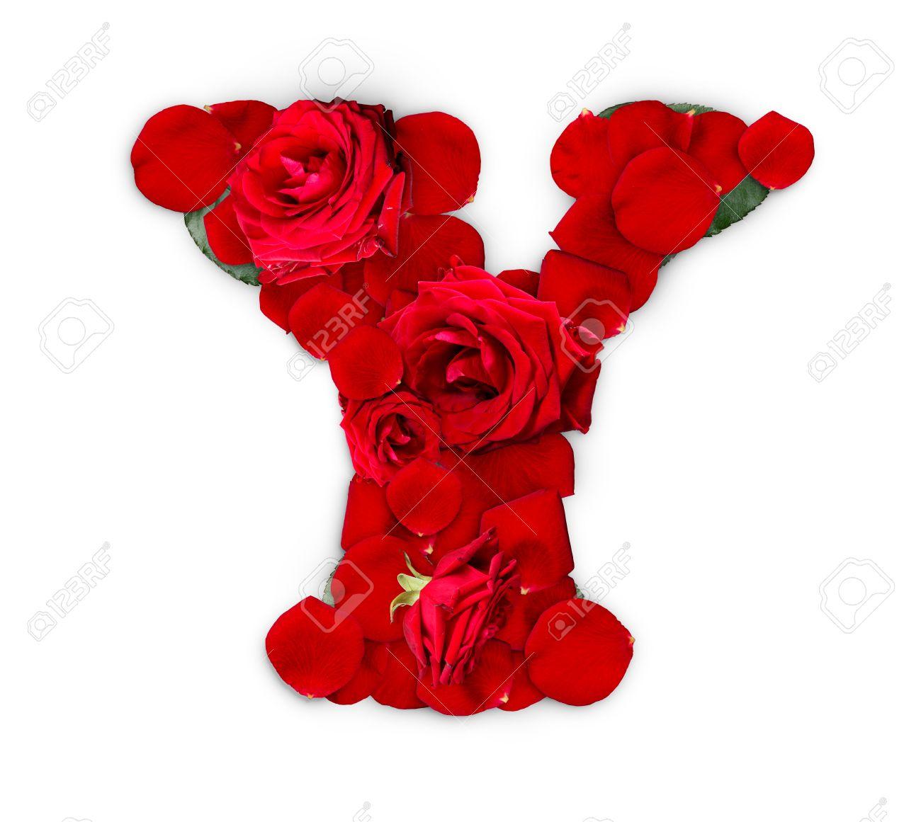 Letra Y Hecha De Rosas Rojas Y Pétalos Aisladas Sobre Un Fondo