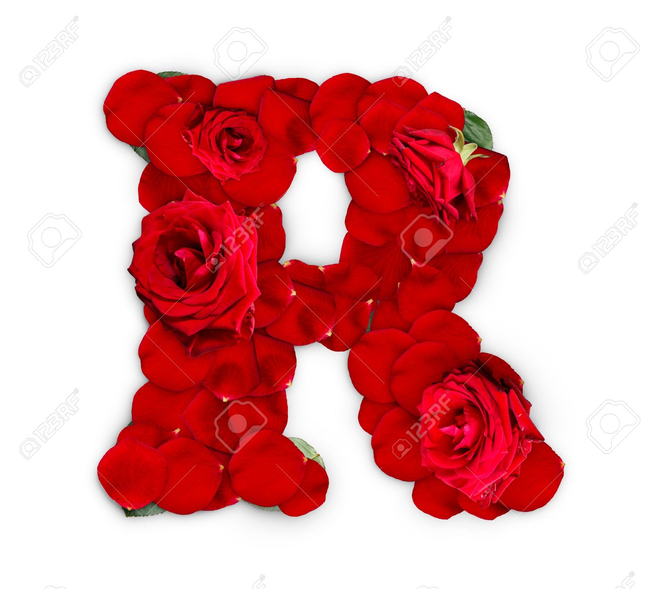 Letter R Made From Red Roses And Petals Isolated On A White Background  Stock Photo
