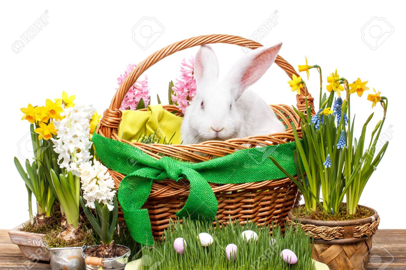 Basket Flower Decoration Easter Decoration With White Rabbit In Basket And Spring Flower