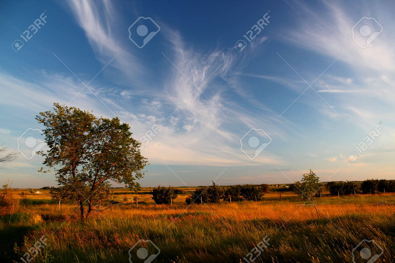 Golden sunset on the field in the prairies with green tree in Manitoba, Canada - 160508547