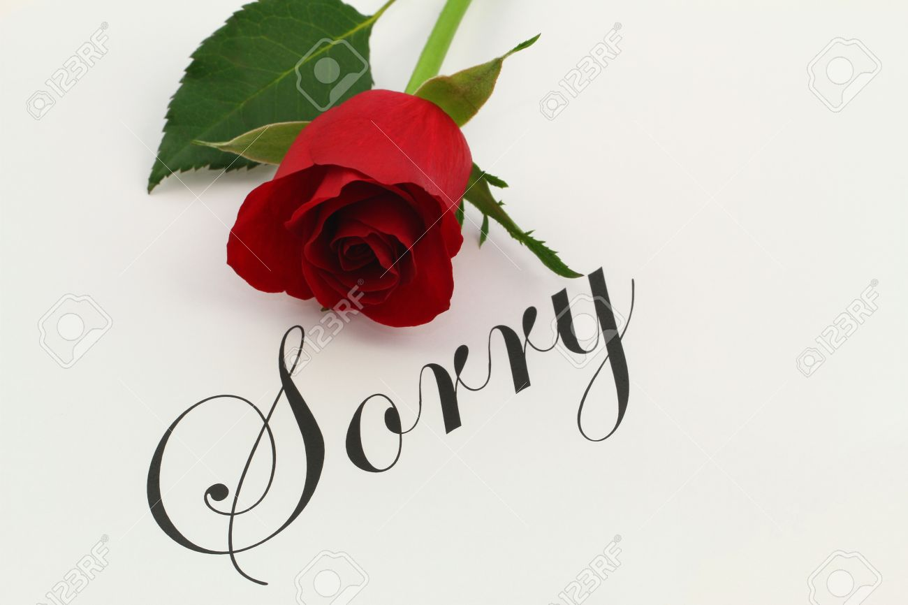 sorry with red rose stock photo, picture and royalty free image