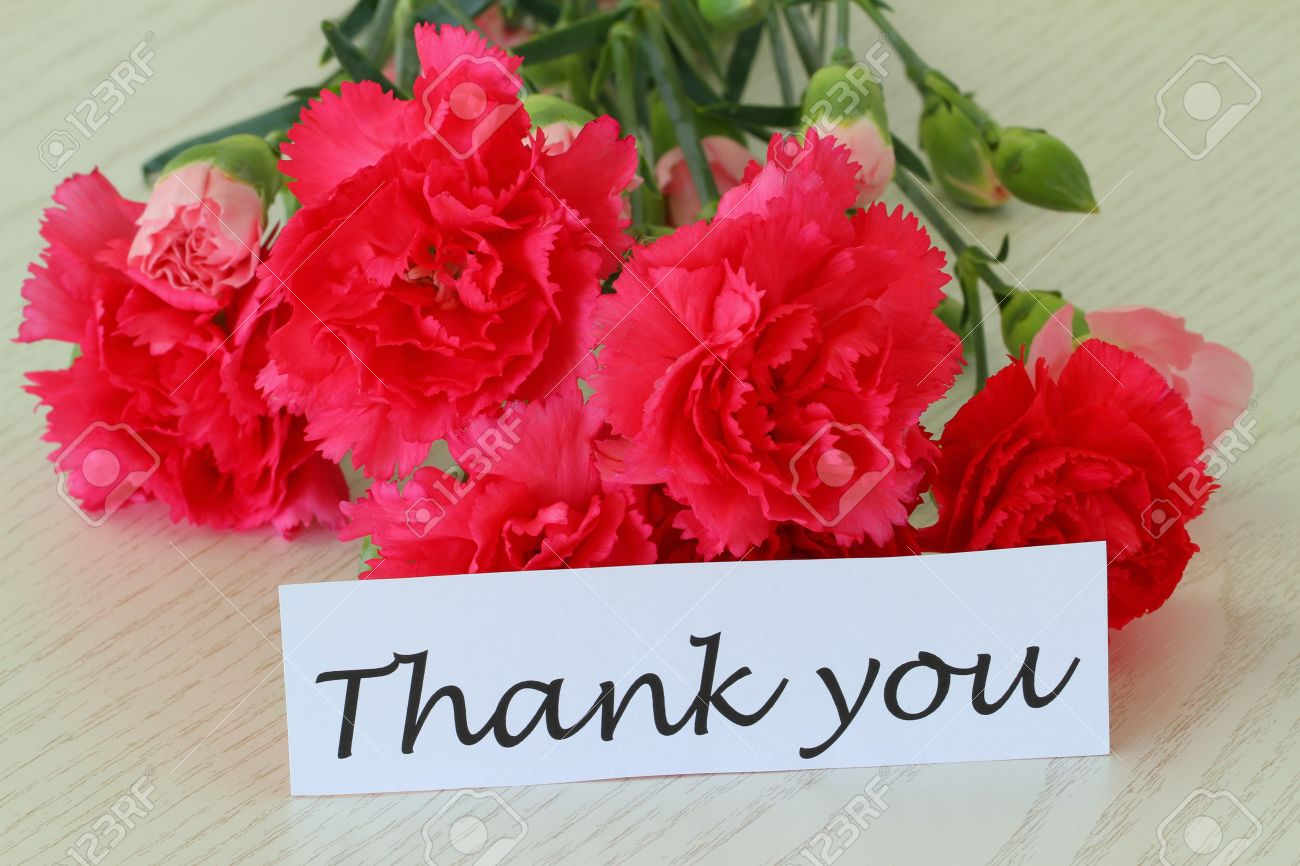 stock photo thank you note with pink carnation flowers