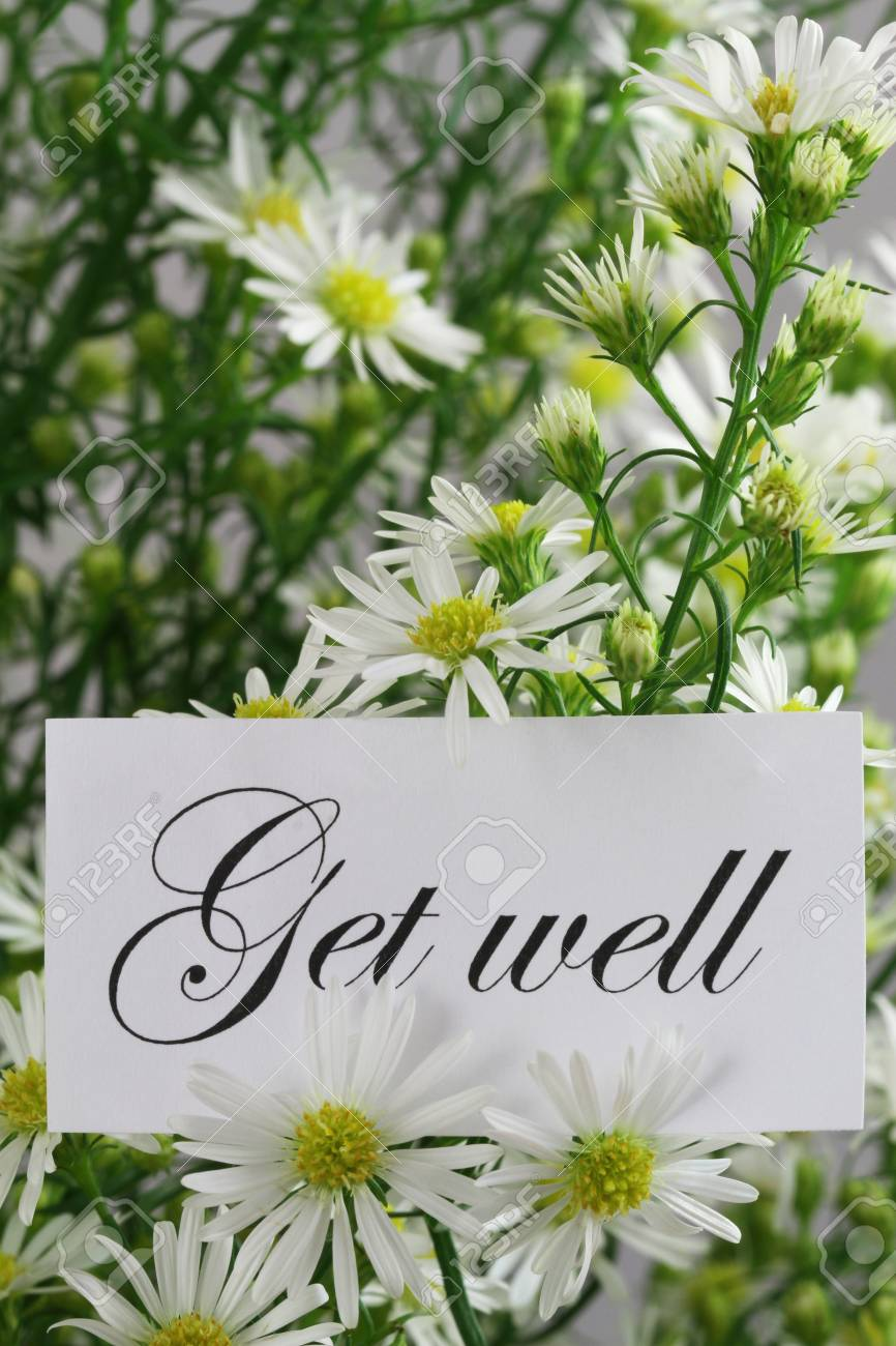 Get Well Card With Fresh Chamomile Flowers Stock Photo Picture And