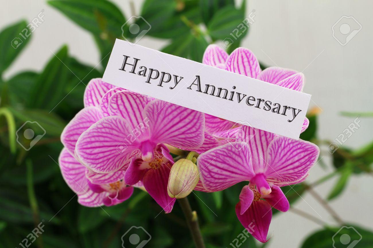 Carte Anniversaire Heureux Avec Orchidee Rose Banque D Images Et