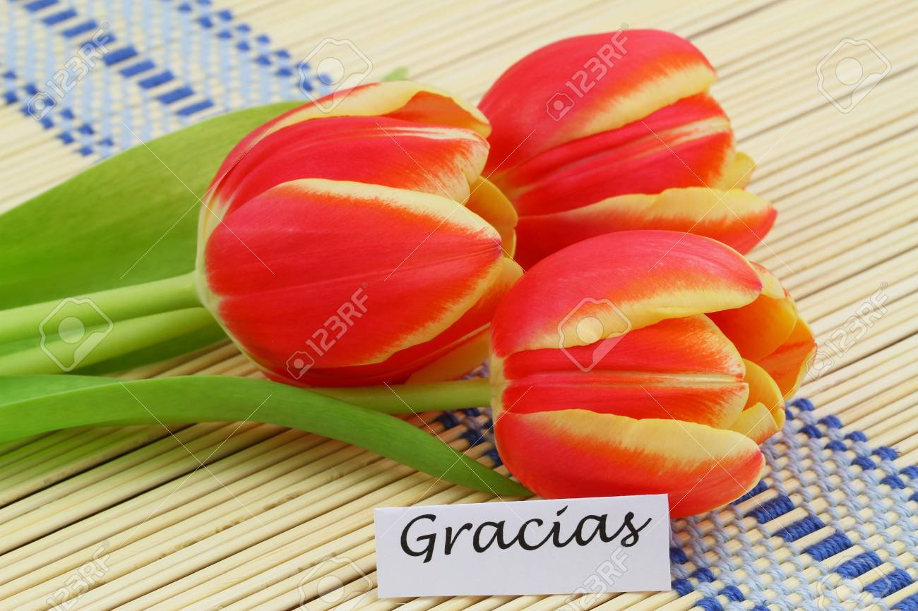 Gracias card which means thank you in spanish with red and stock photo gracias card which means thank you in spanish with red and yellow tulips izmirmasajfo